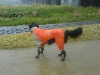いよいよ梅雨入り